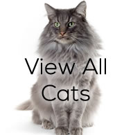 View All Cats