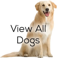 View All Dogs
