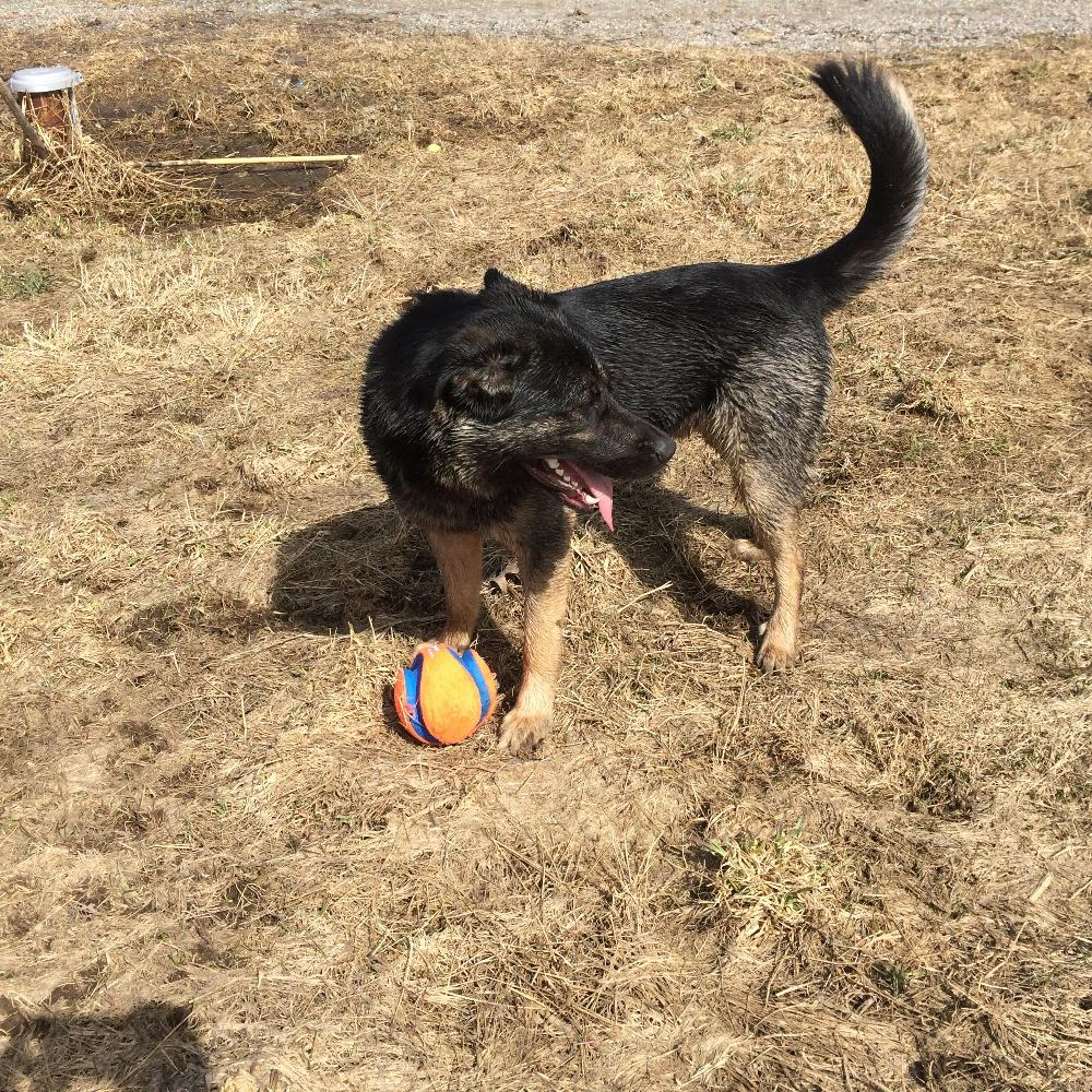 Sault Ste Marie Humane Society Dogs For Adoption