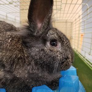 Rabbits (LOTS)